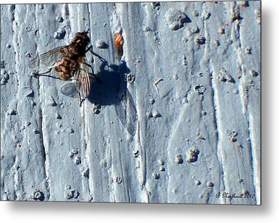 Metal Print featuring the photograph Fly On The Wall by Betty Northcutt