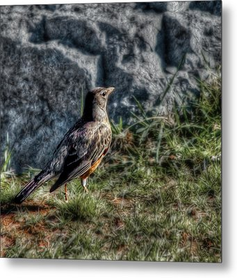 Metal Print featuring the photograph Fly Robin Fly by Pennie  McCracken