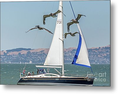 Flyby Two Metal Print by Kate Brown
