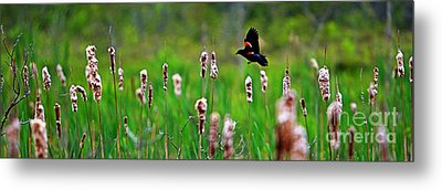 Flying Amongst Cattails Metal Print by James F Towne