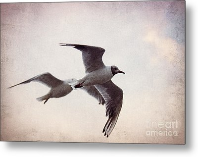 Flying Metal Print by Angela Doelling AD DESIGN Photo and PhotoArt