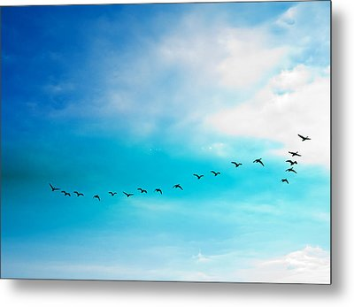 Flying Away Metal Print by Jose Rojas
