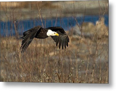 Flying By Metal Print