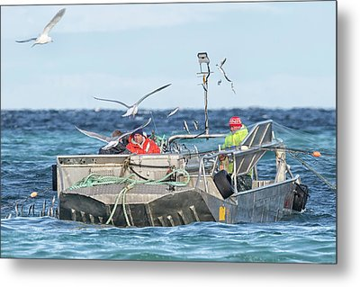 Metal Print featuring the photograph Flying Fish by Randy Hall
