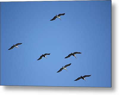 Flying In Formation Metal Print