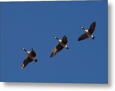Metal Print featuring the photograph Flying In Formation by Monte Stevens