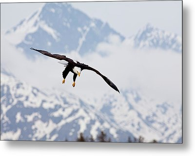 Flying In The Mountains Metal Print by Tim Grams