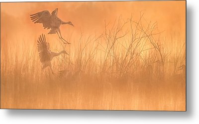 Flying Into The Light And Fog Metal Print