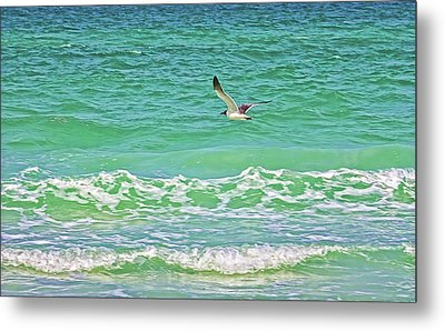 Flying Solo Metal Print by HH Photography of Florida