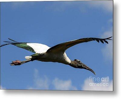 Flying Stork-no Baby Metal Print