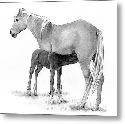 Foal And Mare In Pencil Metal Print