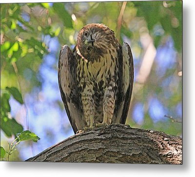 Focused Metal Print by Donna Kennedy