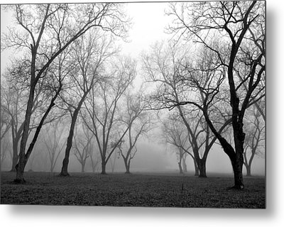 Fog 3 Metal Print by Beverly Hammond