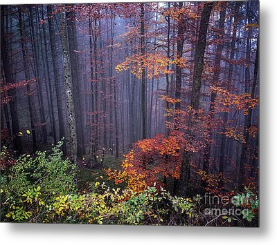 Metal Print featuring the photograph Fog And Forest Colours by Elena Elisseeva