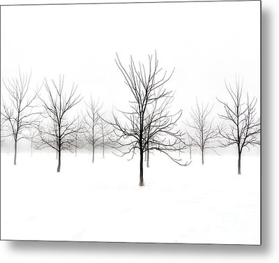 Fog And Winter Black Walnut Trees  Metal Print