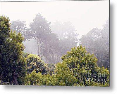 Metal Print featuring the photograph Fog At Lands End by Cindy Garber Iverson