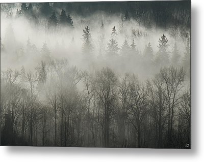 Metal Print featuring the photograph Fog Enshrouded Forest by Lisa Knechtel