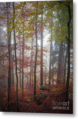 Metal Print featuring the photograph Fog In Autumn Forest by Elena Elisseeva