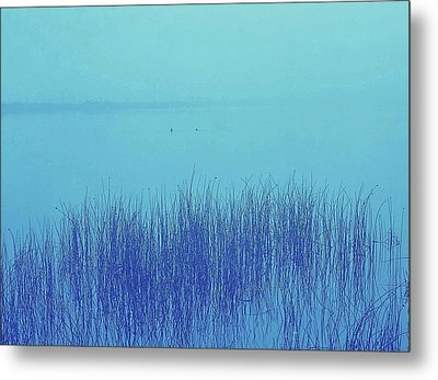 Metal Print featuring the photograph Fog Reeds by Laurie Stewart