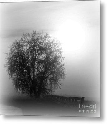 Fog Tree Metal Print by Barbara Henry