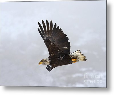 Foggy Flight Metal Print by Mike  Dawson