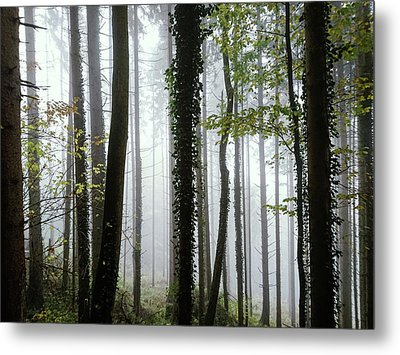 Foggy Forest Metal Print by Chevy Fleet