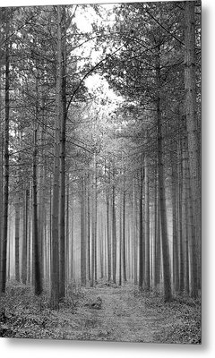 Foggy Forest Metal Print by Svetlana Sewell