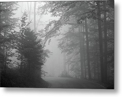 Foggy Forest Metal Print by Yago Veith