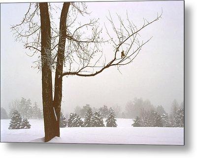 Foggy Morning Landscape 16 Metal Print by Steve Ohlsen
