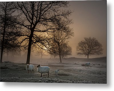 Foggy Morning Metal Print by Piet Haaksma