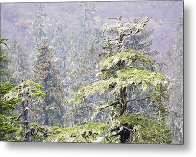 Foggy Tongass Rain Forest Metal Print by Eggers Photography
