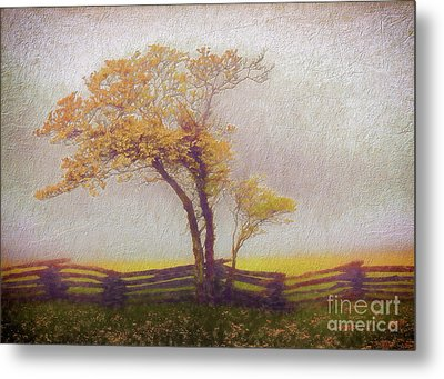 Foggy Tree And Fence In The Blue Ridge Ap Metal Print