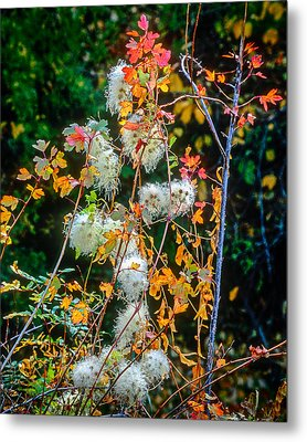 Foliage Twisted Colored Leaves Metal Print