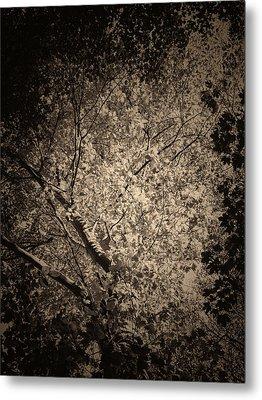 Foliage Metal Print by Wim Lanclus