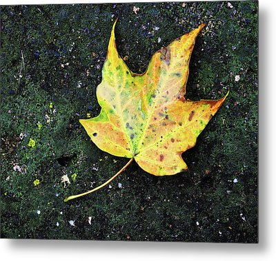 Metal Print featuring the photograph Foliation by Tom Druin