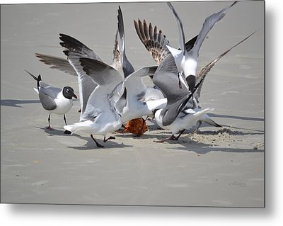 Food Fight - Gulls At The Beach Metal Print