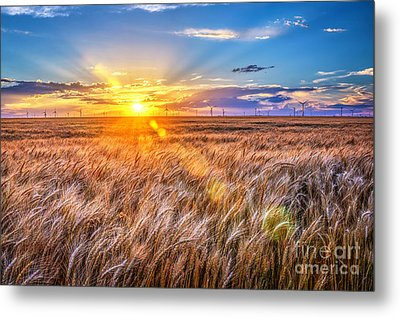 For Amber Waves Of Grain Metal Print by Jean Hutchison