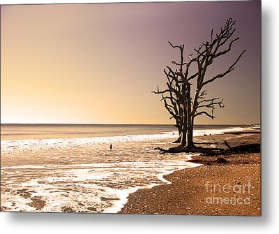 Metal Print featuring the photograph For Just One Day by Dana DiPasquale