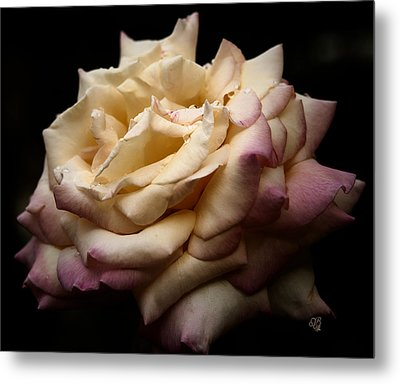 For Rose Lovers Metal Print by Barbara Middleton