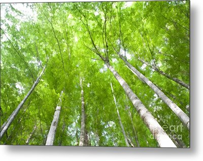 Metal Print featuring the photograph Forest 1 by Jean Bernard Roussilhe