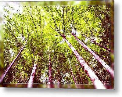 Metal Print featuring the photograph Forest 2 by Jean Bernard Roussilhe