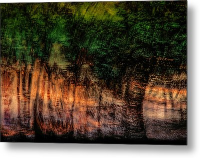 Forest At Sundown Metal Print by Phyllis Clarke