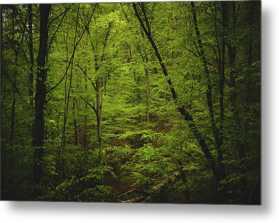 Metal Print featuring the photograph Forest Beckons by Shane Holsclaw