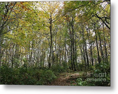 Forest Canopy Metal Print