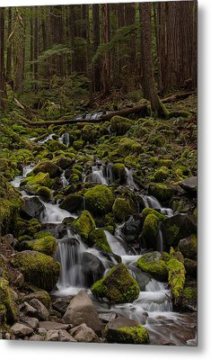 Forest Cathederal Metal Print by Mike Reid