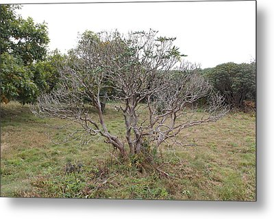 Forest Character Tree Metal Print