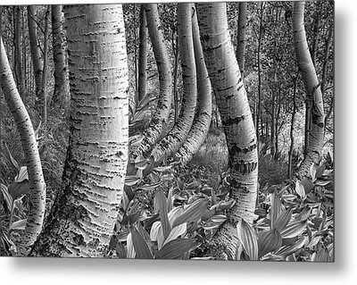Forest Curves Metal Print