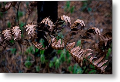 Forest Ferns Metal Print by Glenn DiPaola