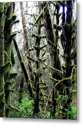 Forest Finery Metal Print by Will Borden