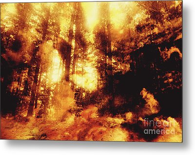 Forest Fires Metal Print